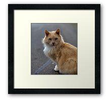 Winston the Wonder Cat Framed Print