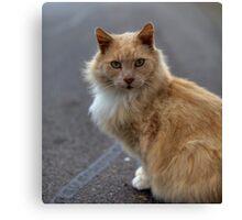 Winston the Wonder Cat Canvas Print