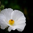 Waiting for You - Mexican Prickly Poppy by Vicki Pelham