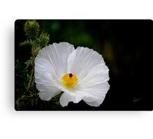 Waiting for You - Mexican Prickly Poppy Canvas Print