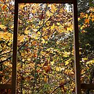 Looking Through to Autumn by AnnDixon