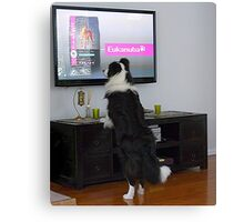 Clever dog  'Ollie'.........................! Canvas Print