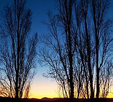 Poplars at Dusk by Tim Coleman