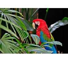 SPIRIT OF THE TROPICS Photographic Print