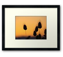 Sunset of the Pussy Willow Framed Print