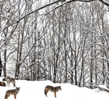 A winter scene - with Coyotes  Sticker