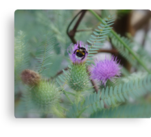 Nature of NZ Canvas Print