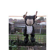 poor black bear Photographic Print