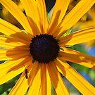 A Bug on the Sun by Tori Snow
