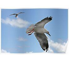 Silver Gulls Poster