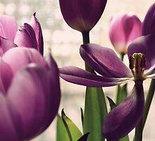 Vintage tulip by rafstardesigns