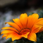Yellow Flower by steffirae