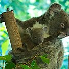 Hugs by fnqphotography