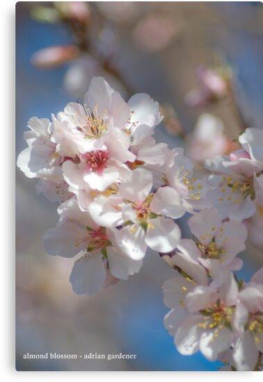 Almond Blossom 2 by garts
