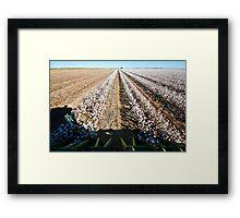 In Harvest Framed Print