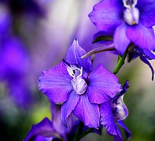 ORCHID BEAUTY by PALLABI ROY