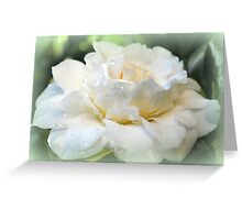 Gardenia, white and pure Greeting Card