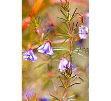 Botanical Gardens 3 Photographic Print