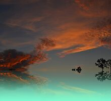 Fine Art Turtle & cat abstract cloud  photo by Carlo Marandola
