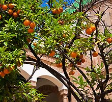 Morocco. Casablanca. City Hall. Inner Courtyard. Oranges. by vadim19
