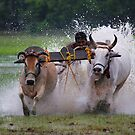 BULL RACE by PALLABI ROY