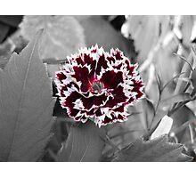 Flower Photographic Print