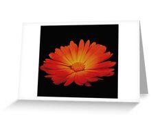Marigold on black Greeting Card