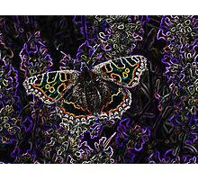 Glowing butterfly Photographic Print
