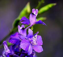 ORCHID by PALLABI ROY