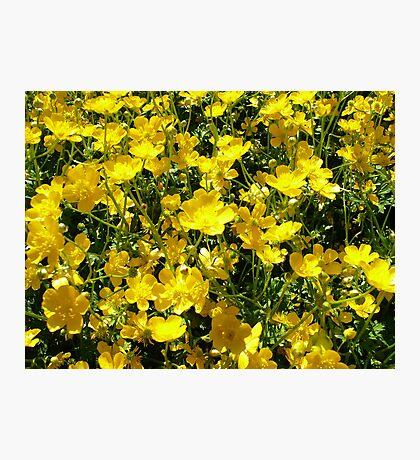 Yellow Explosion Photographic Print