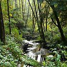Sunny Creek by Jess Meacham