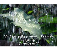 """Proverbs 11:28""  by Carter L. Shepard Photographic Print"