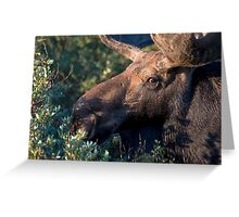 Moose portrait Greeting Card