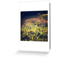 Little violet flowers on the meadow (Vintage and Retro nature Photography) Greeting Card