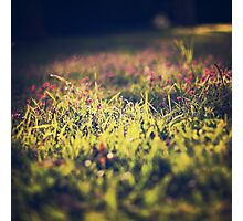 Little violet flowers on the meadow (Vintage and Retro nature Photography) Photographic Print