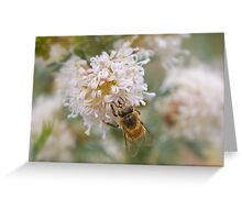 Bee on native flower Greeting Card