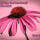 Let everything that has breath praise the Lord by hummingbirds