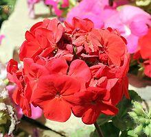 Red Flowers by Jerry Dorado Alcantara