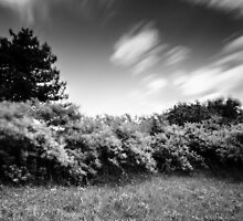 Time with the sky and shrubbery by InaMaria