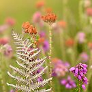 Bell Heather by Kasia Nowak