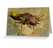 Gold & Brown Rove Beetle Greeting Card