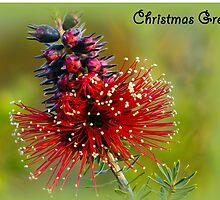 Kunzea Christmas card by Jennie  Stock