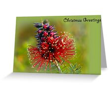 Kunzea Christmas card Greeting Card