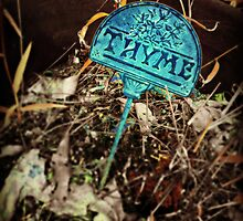 Thyme by Scott Mitchell