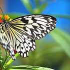 Paper Kite Butterfly by Poete100