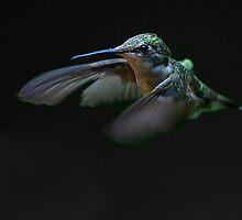 Hummingbird by Jim Cumming