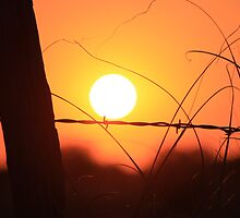 Bright Orange  Fence Line Sunset by ROBERTDBROZEK