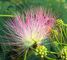Persian Silk Bloom by Sharon Woerner