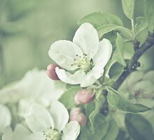 Apple Blossom Baby by BobbiFox