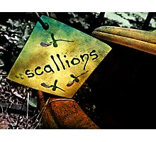 S C A L L I O N S  Photographic Print